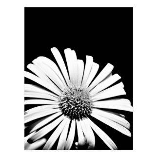 Carte postale d'art de fleur de Doronicum (noire