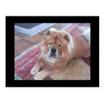 Carte postale de chien de bouffe de bouffe