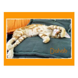 Carte postale de stupéfaction de chat de Dahab