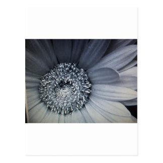 Carte Postale fleur noire et blanche