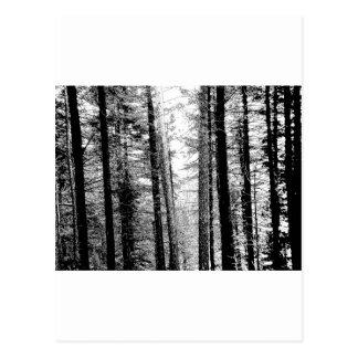 Carte Postale Forêt en noir et blanc