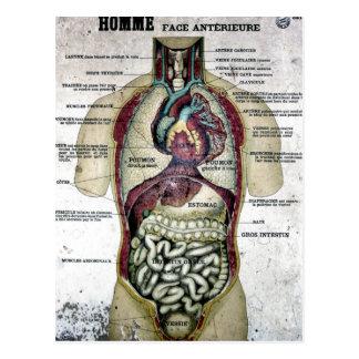 Carte postale française vintage d'anatomie