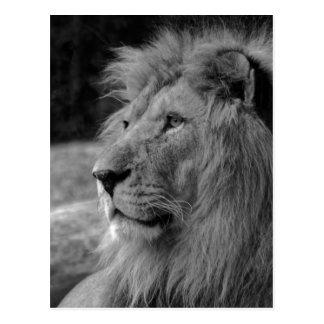 Carte Postale Lion noir et blanc - animal sauvage