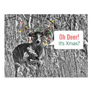 Carte Postale Noël drôle - cerf commun avec des lumières de Noël