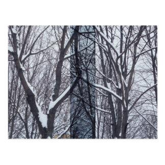 Carte Postale Noir et blanc, arbres et neige