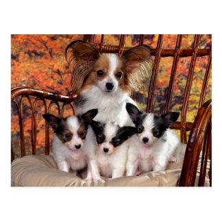 Carte Postale Papillon puppies with mum