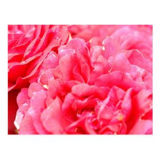 Carte postale rose
