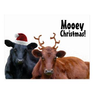 Carte Postale Vaches à vacances de Noël dans le casquette et des