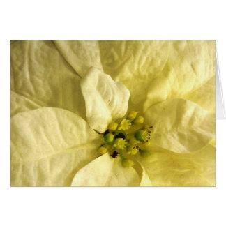 Cartes de note de fleur de mois de naissance -