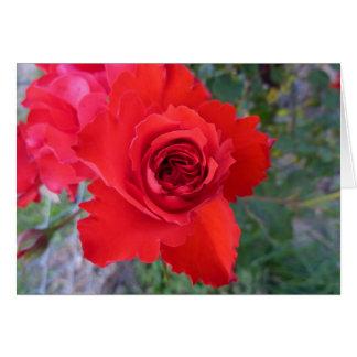 Cartes de note de rose rouge
