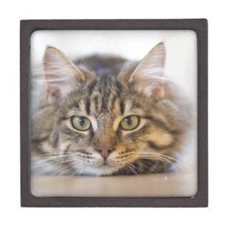 cat-1686730 schmuckkiste