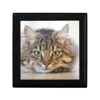 cat-1686730 schmuckschachtel