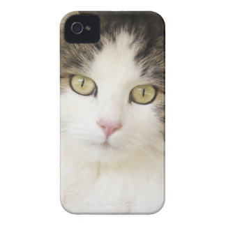CAT ELECTRONIC DEVICES COVER iPhone 4 HÜLLEN