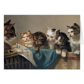 CAT-SCHULE GRUßKARTE
