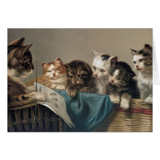 CAT-SCHULE KARTE