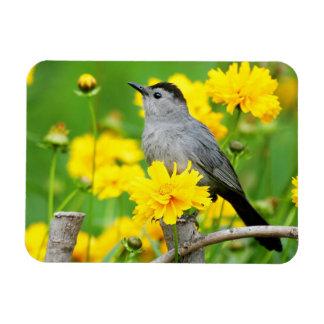 Catbird gris sur la barrière en bois magnet rectangulaire avec photo