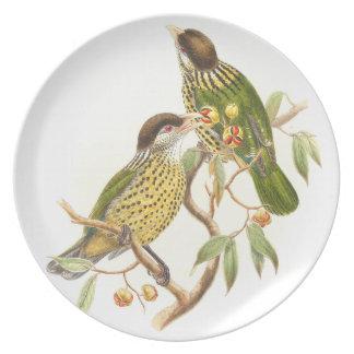 Catbird-Vogel-Tier-Tiere botanisch Melaminteller