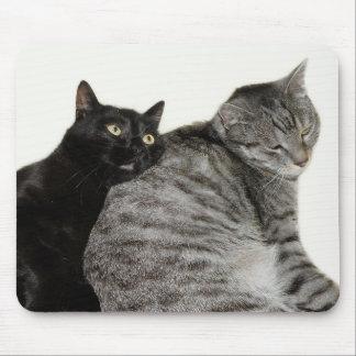 Cats love mauspads