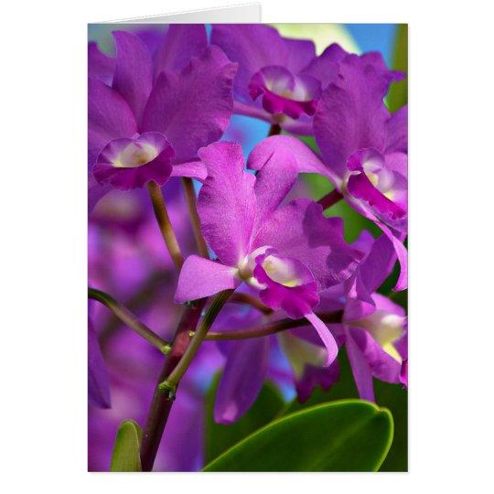 Cattleya Porcia Grußkarte