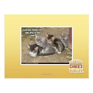 Caturday Conga-Linie Postkarte