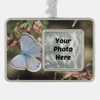 Ceraunus Blau-Schmetterling Rahmen-Ornament Silber