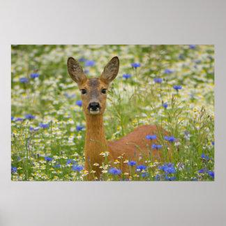 Cerf commun dans le pré fleurissant, gros-plan,