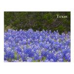 Champ du Texas des Bluebonnets Carte Postale