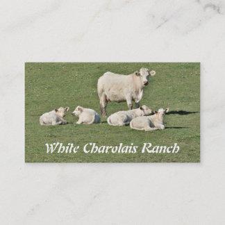 Charolais cow and four calves