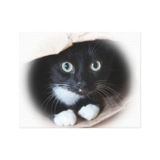 Chat dans un sac impression sur toile