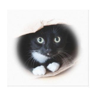 Chat dans un sac toiles tendues sur châssis