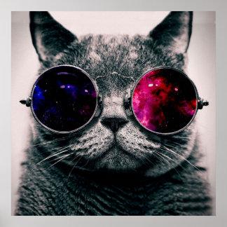 chat de lunettes de soleil poster