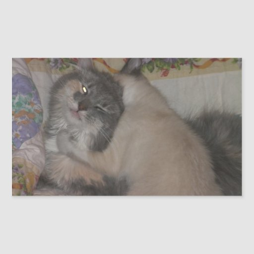 chat mignon et chaton espiègle autocollant rectangulaire