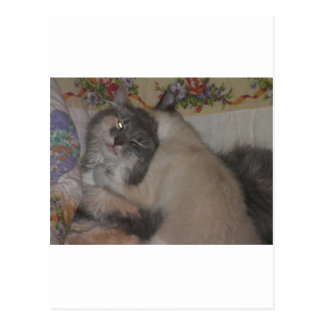 chat mignon et chaton espiègle cartes postales