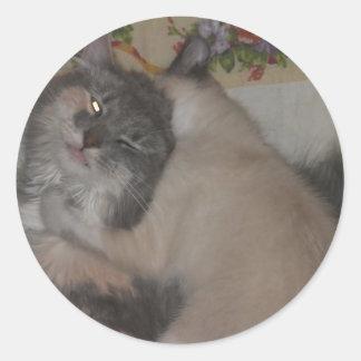 chat mignon et chaton espiègle sticker rond