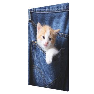 chaton dans le sac de jeans toiles tendues