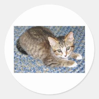 chaton espiègle sticker rond