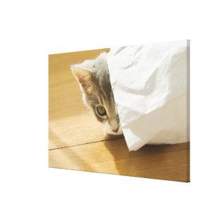 Chaton se cachant dans le sac de papier toile tendue