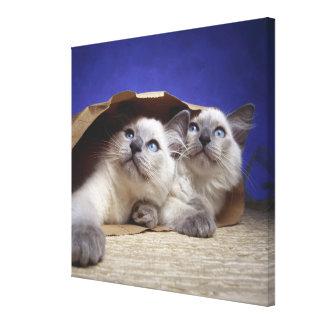 Chats dans le sac de papier impression sur toile