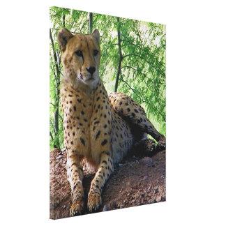 Cheetah-Leinwand Leinwanddruck