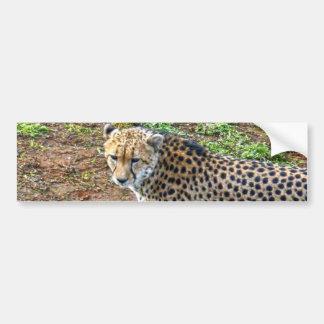 Cheetah_Tactic, _ Autoaufkleber
