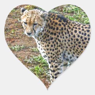 Cheetah_Tactic, _ Herz-Aufkleber