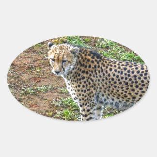 Cheetah_Tactic, _ Ovaler Aufkleber