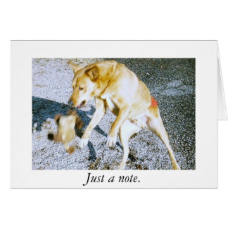 chien jouant, juste une note carte de correspondance