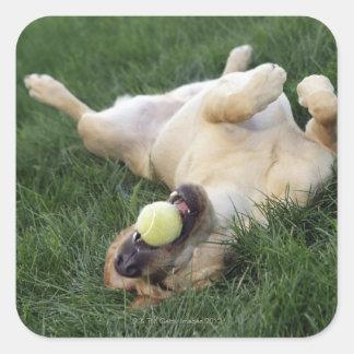 Chien s'étendant upside-down dans l'herbe avec de sticker carré
