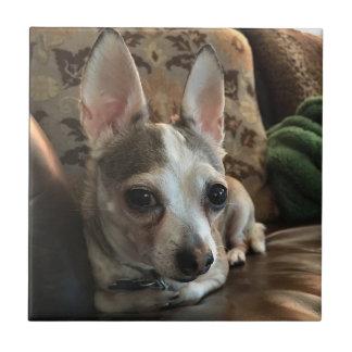Chihuahua-HundeKeramik-Fliese Kleine Quadratische Fliese