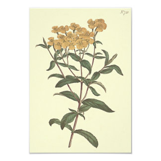 Chili-Ringelblumen-botanische Illustration Karte