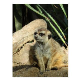 chillin meerkat postkarte