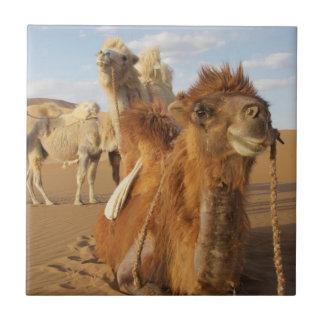 China, Innere Mongolei, Badain Jaran Wüste 2 Keramikfliese