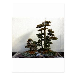 Chinesische Wacholderbusch-Bonsais-Bäume Postkarte