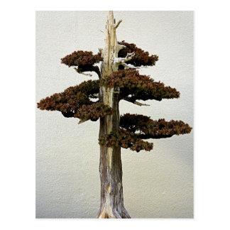 Chinesischer Wacholderbusch-Bonsais-Baum Postkarte
